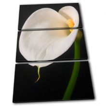 Calla Lily Flowers Floral - 13-1629(00B)-TR32-PO